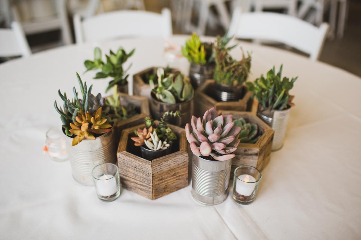 Hoa đá được ưa chuộng đặt trên bàn làm việc